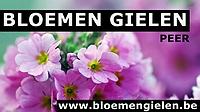 sm_bloemen-gielen